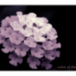 color of the life